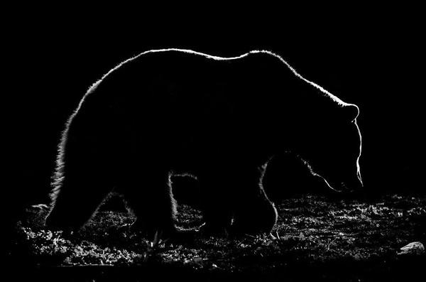 アウトラインとシルエットが美しい白黒の動物写真