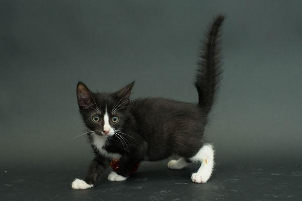 アメリカのアニマルシェルターで里親を待つ黒猫たちの写真 (6)