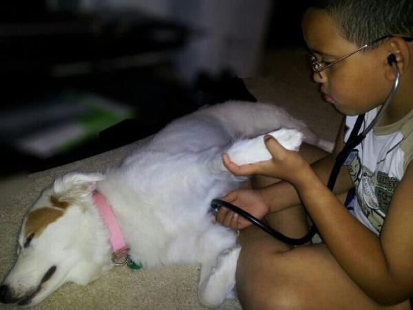 ペットは大切な家族!犬や猫と人間の子供の画像 (44)