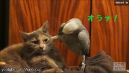 否、弱肉強食!鳥は猫よりも強し?