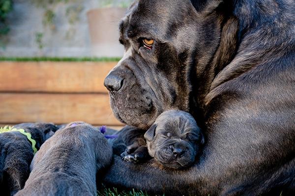 お母さん犬とその子犬達のソックリ集合写真!犬親子画像 (30)