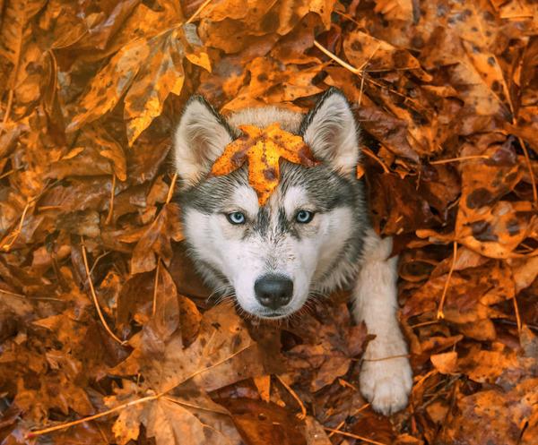 紅葉や秋の森の中を楽しむ動物たちの画像 (30)