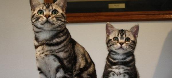大人猫と子供猫の仲良し画像 (7)
