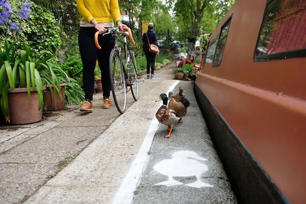 アヒル専用道路 ダックレーン duck lanes 5