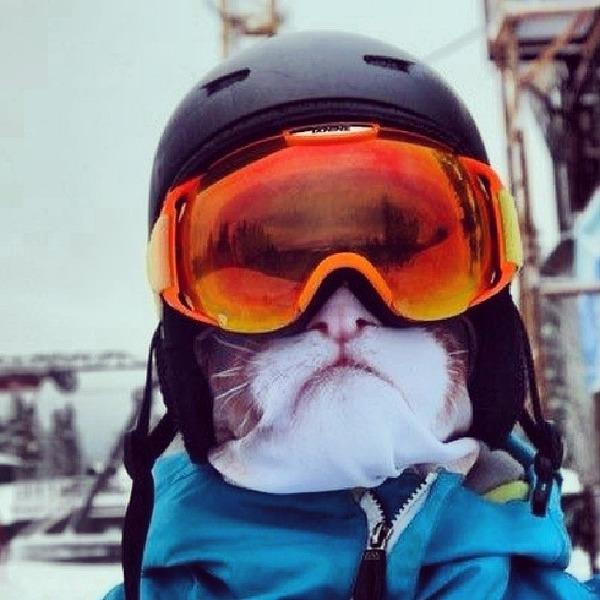 動物気分でスキー!動物の顔がプリントされたフェイスマスク (2)