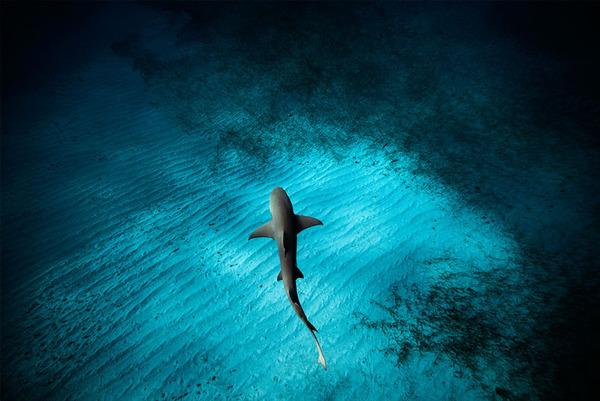 サメの海中写真 Jorge Cervera Hauser 4