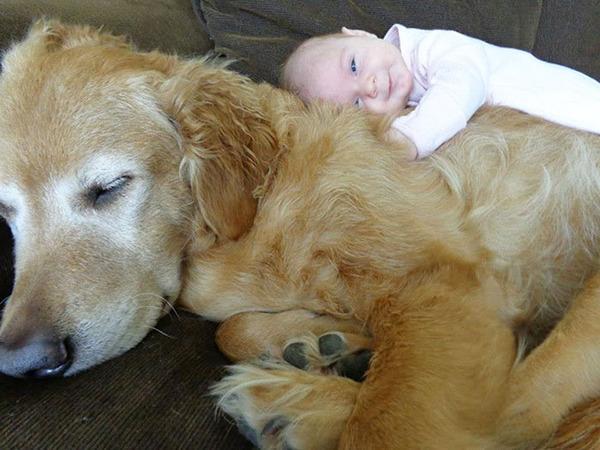 ペットは大切な家族!犬や猫と人間の子供の画像 (89)