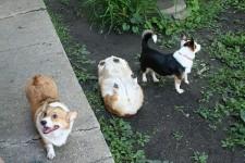 UMA?犬であることを忘れた犬、というかもはや謎の物体が発見される