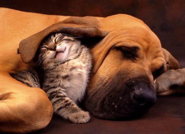 犬と子猫のお昼寝