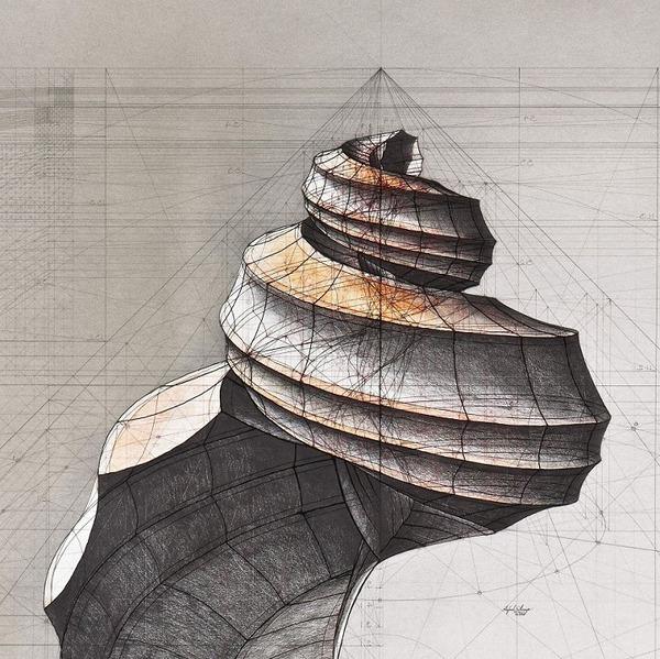 黄金比で描かれた手描きイラスト集!蝶や貝殻など (12)