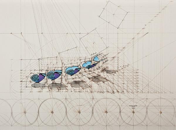 黄金比で描かれた手描きイラスト集!蝶や貝殻など (13)