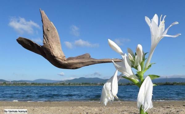 歪な形がゾンビっぽい!ドナウ川の流木で作られた彫刻作品 (14)