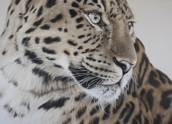 超繊細!ヒョウやライオンなどの野生動物をリアルに描いた絵画 (5)