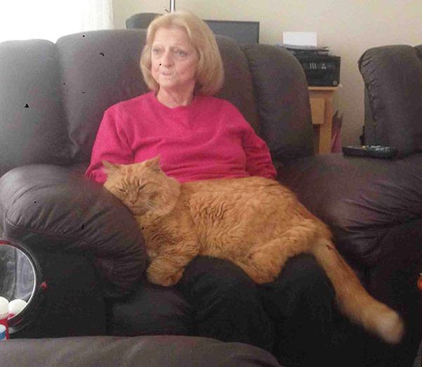 とても大きい猫の画像 19
