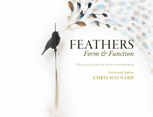 鳥の羽から切り取られた鳥類や動物のモチーフ (5)