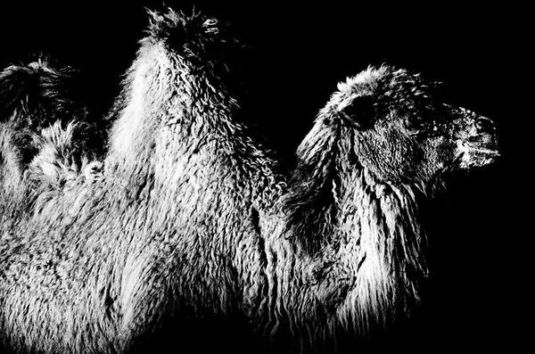 アウトラインとシルエットが美しい白黒の動物写真 7