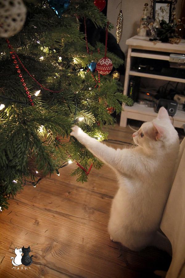 猫、あらぶる!クリスマスツリーに登る猫画像 (18)