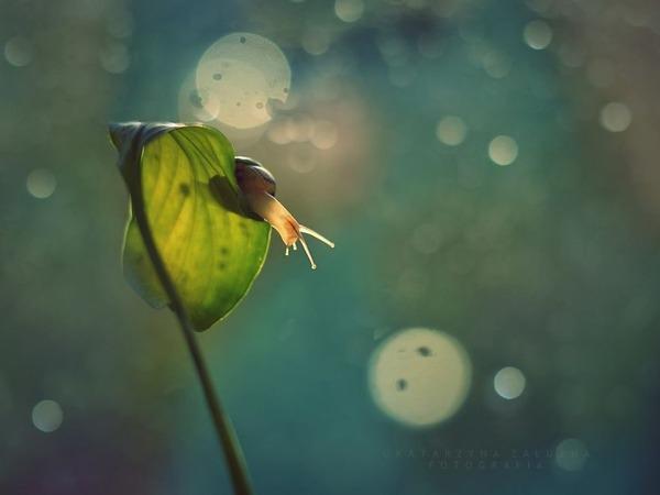 メルヘンチック!カタツムリの小さな世界を激写 (3)