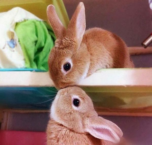 超ふわふわ!モフモフで愛らしいウサギの画像20枚 (8)