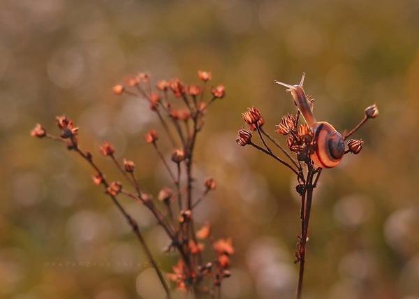 メルヘンチック!カタツムリの小さな世界を激写 (11)