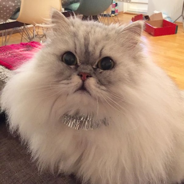 綿菓子フワフワ!モフモフしたくなる長毛種の猫画像 (49)