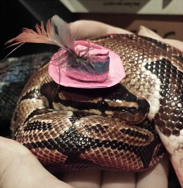 なんだこれカワイイぞ!帽子を被ったヘビ画像特集 (11)