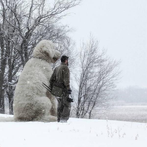 犬を大きくする!そんな夢をフォトショップの画像加工 (11)