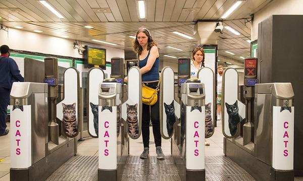 猫だらけ!猫の写真で満たされたロンドンの地下鉄 (8)