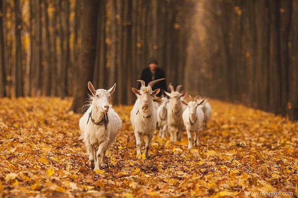 紅葉や秋の森の中を楽しむ動物たちの画像 (22)