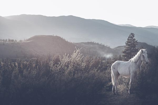 野生の馬の写真 (12)