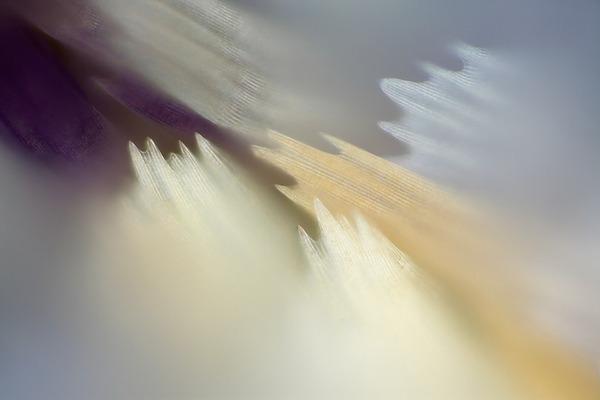 カラフルで美しすぎる!蝶の羽を拡大したマクロ写真 (6)