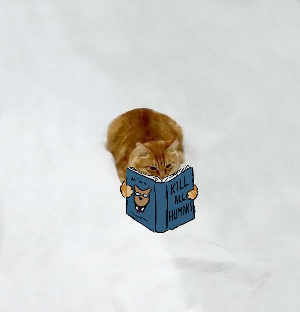 才能の無駄遣い?香箱座りの猫の画像にみんなで落書き! (6)