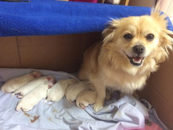 お母さん犬とその子犬達のソックリ集合写真!犬親子画像 (18)