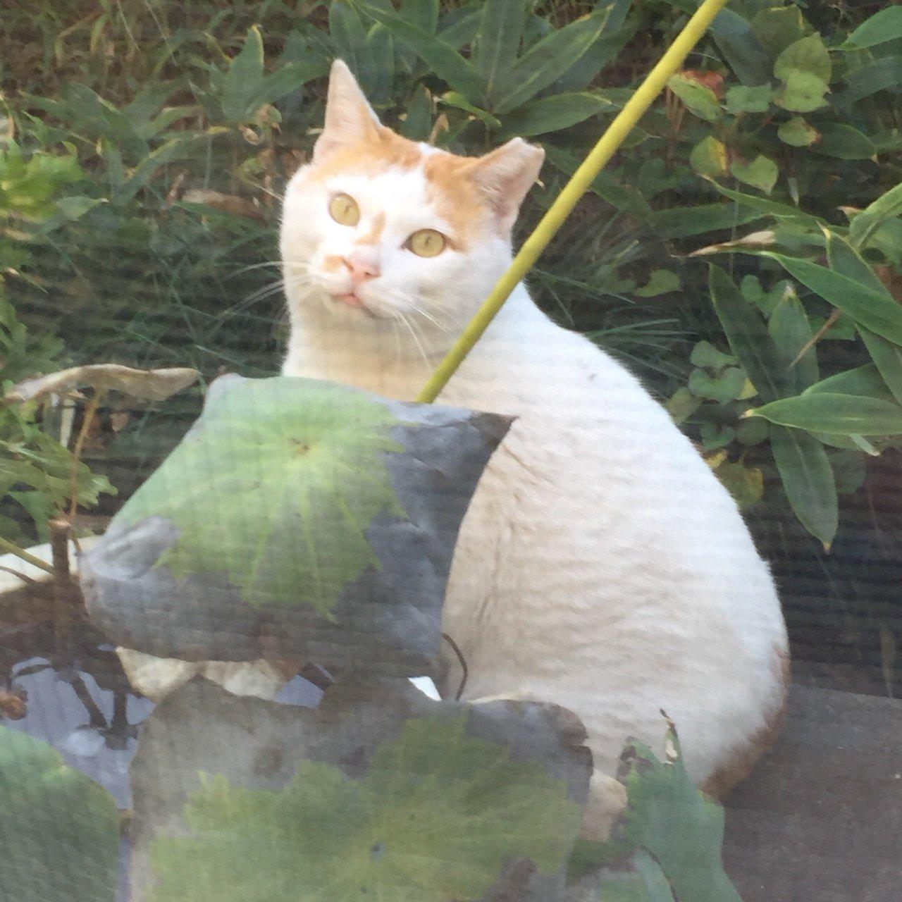 猫餌付け タグの一覧へ  タグ : 猫餌付け rabirabi55 at 21:57│Comme