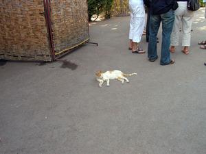 2005��4�����å�:MOROCCO:Marrakesh:�ޥ饱����