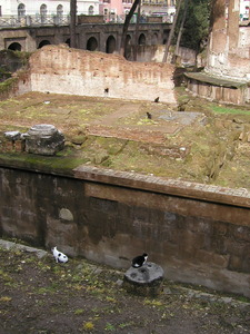 2006_301ローマ012