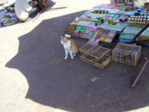 2005��3�����å�:MOROCCO:Marrakesh:�ޥ饱����