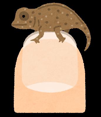 animal_micro_hime_chameleon