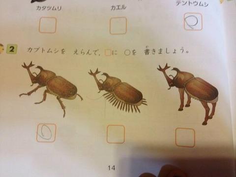 【画像】気色悪いカブトムシが発見されるwwwwwwwwwwww