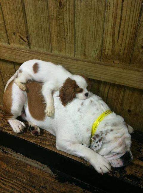 寝ている動物