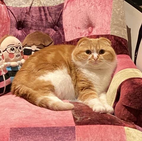 【悲報】HIKAKINの飼い猫まるお、いくらなんでもデブ過ぎるwwwwwww (※画像あり)
