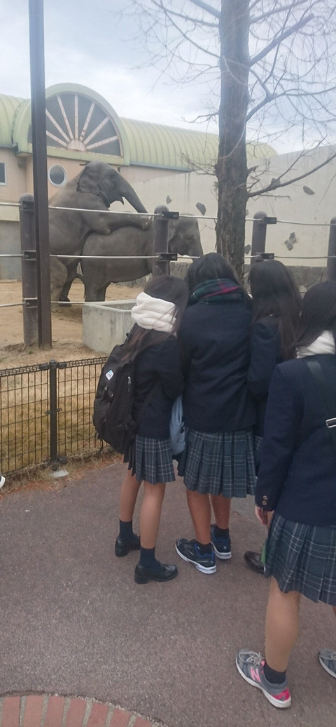 【画像】女子高生の目の前で象