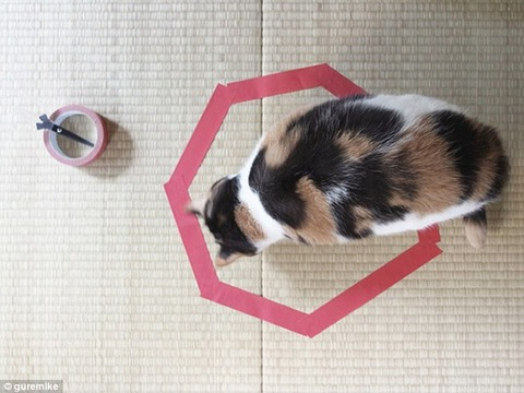 1414767173470_wps_3_Cat_Circles_The_Curious_P