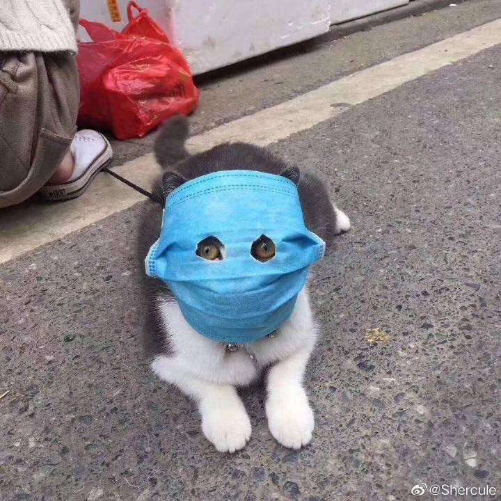武漢のマスク猫、フィギュア化されてしまうwwwww (※画像あり)