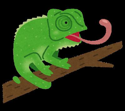 animal_chameleon