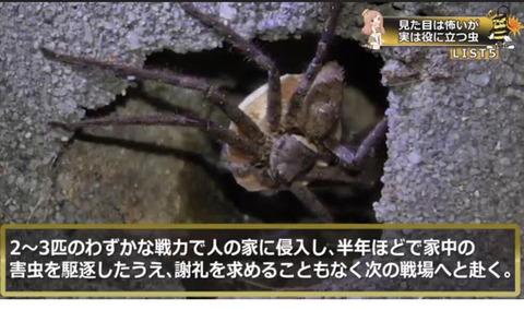 【画像】アシダカグモ、ガチでラストサムライだった