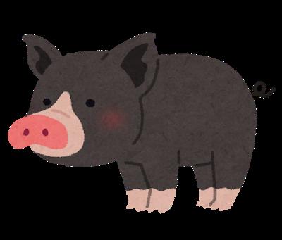 animal_kurobuta_pig