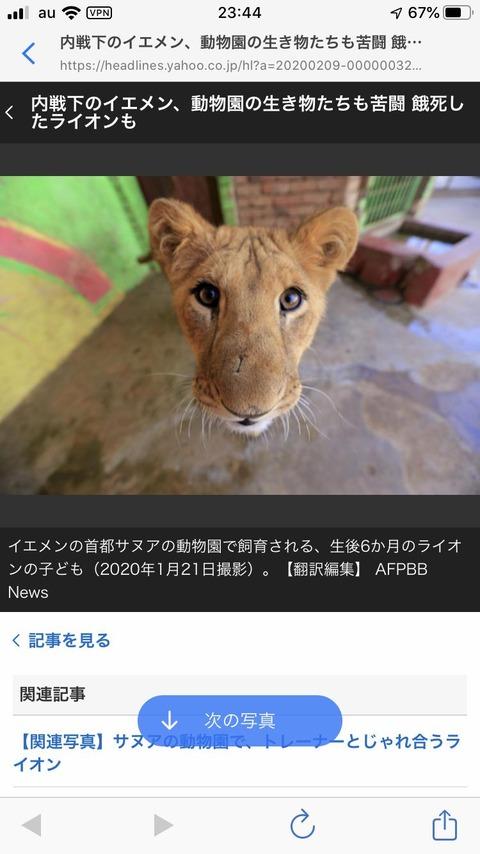 【画像】 明らかに合成っぽいライオン、発見される!!!!!!!!!!!!!!!!