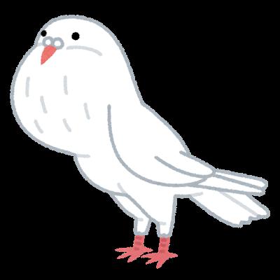 bird_pouter_hato