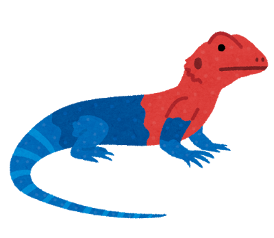 tokage_red_headed_rock_agama